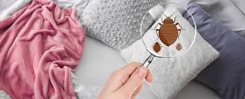 four signs of bed bugs